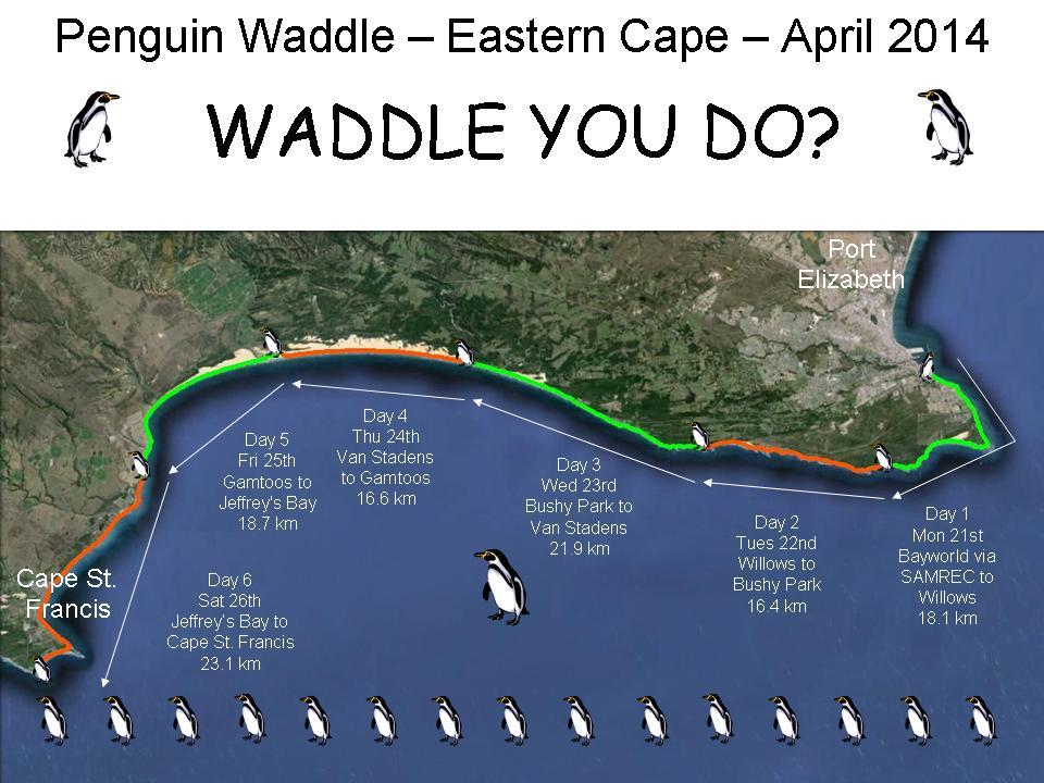 Penguin Waddle 2014