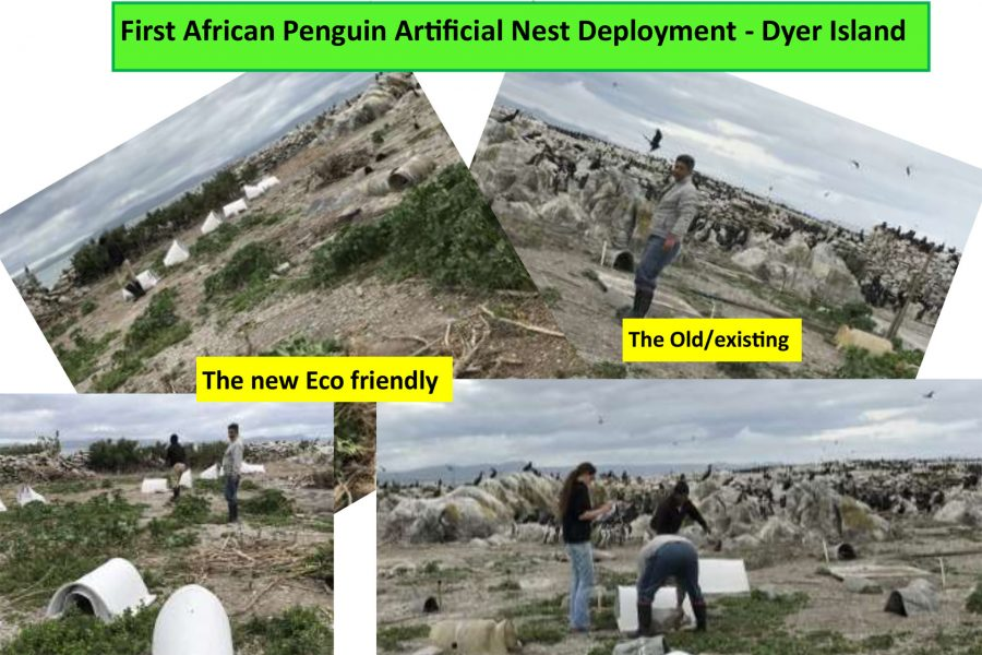 First deployment of artificial nests on Dyer Island